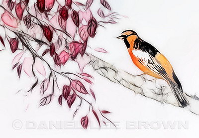 "Oriole in plum tree.  For purchase information and prices, click the ""BUY"" button."