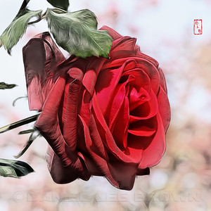 Red Rose, photoshop manipulation.