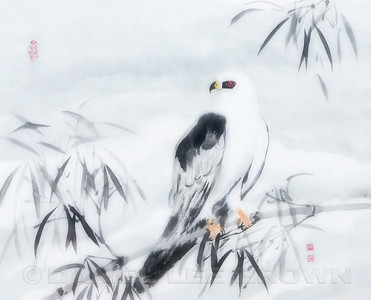 White-tailed Kite, Chinese Brush painting. Softened in photoshop.