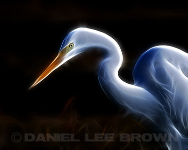 Great Egret, Photoshop illustration.