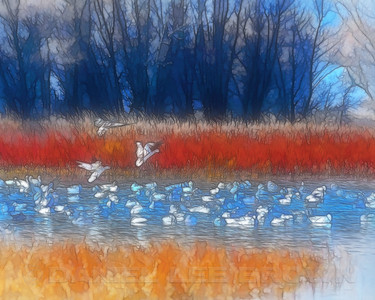 Digitally produced from a photograph taken at Colusa NWR, 12-10-11.