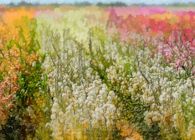 Imperial County flower field