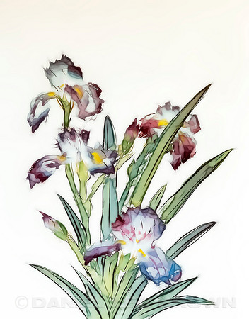 "Iris #2.  For purchase information and prices, click the ""BUY"" button."