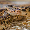 Reptiles & Amphibians : 1 gallery with 13 photos