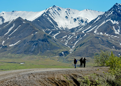 Birding along the Denali Park Road, Denali Alaska, 6-22-14. Cropped image.